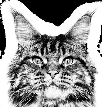 Egészséges táplálás fajtatiszta macskáknak