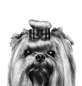 Štěně a pes