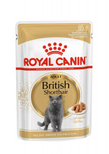 British Shorthair 12x