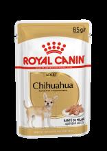 Chihuahua 12x