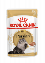 Persian Adult 12x